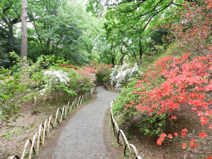 深い森の中にツツジが咲き、小川が流れる和風自然庭園
