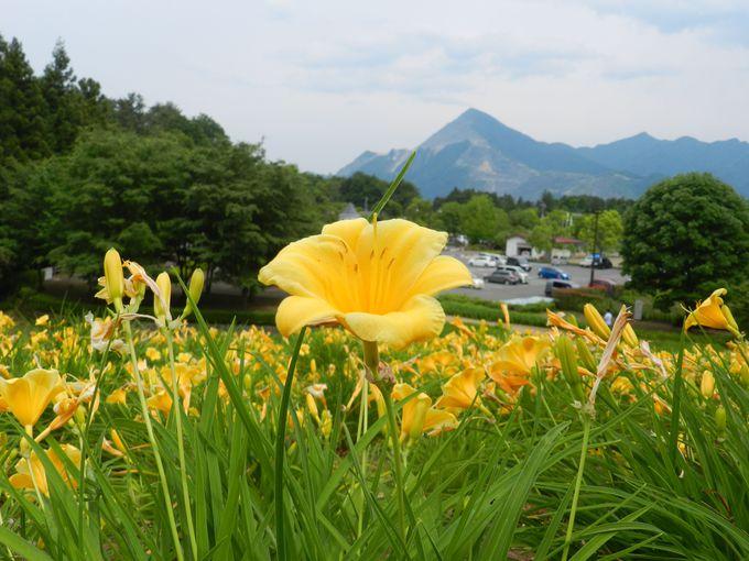 四季の移ろいを体感できる、自然豊かな丘の上で……