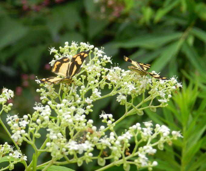 昆虫を探すのなら、まず「花」をチェックしよう