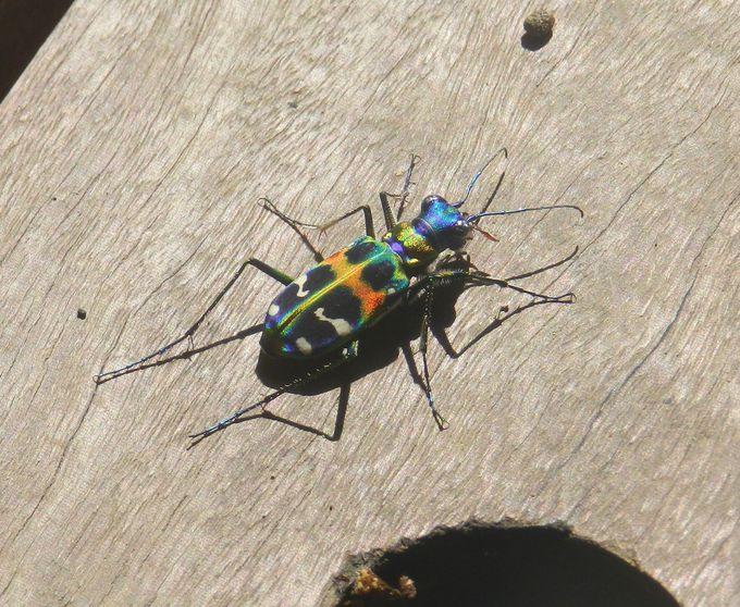 夏の横浜つながりの森は、美しい昆虫の宝庫です!