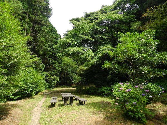 瀬上市民の森 —清らかな小川の流れる森の散策路—