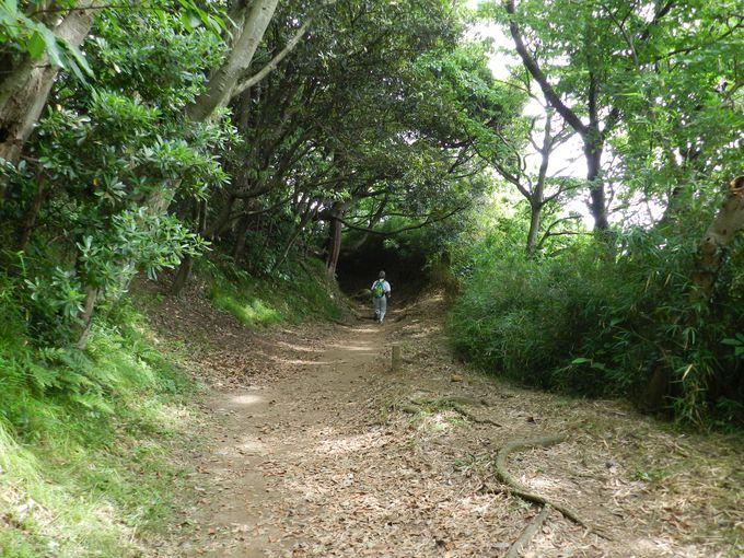 横浜市内と侮るなかれ! 本格的なハイキングコースです