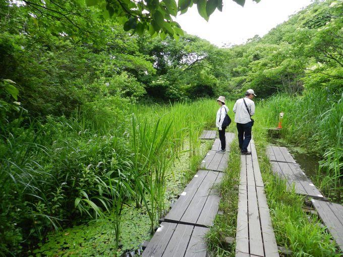 横浜自然観察の森 —豊かな森の中に川の水源を有する森—