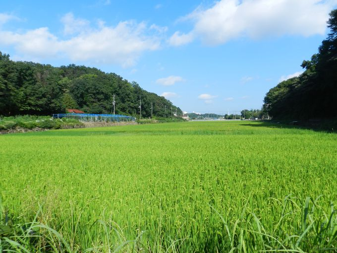 日本伝統、谷戸の里山景観。のどかな農の空間を満喫!