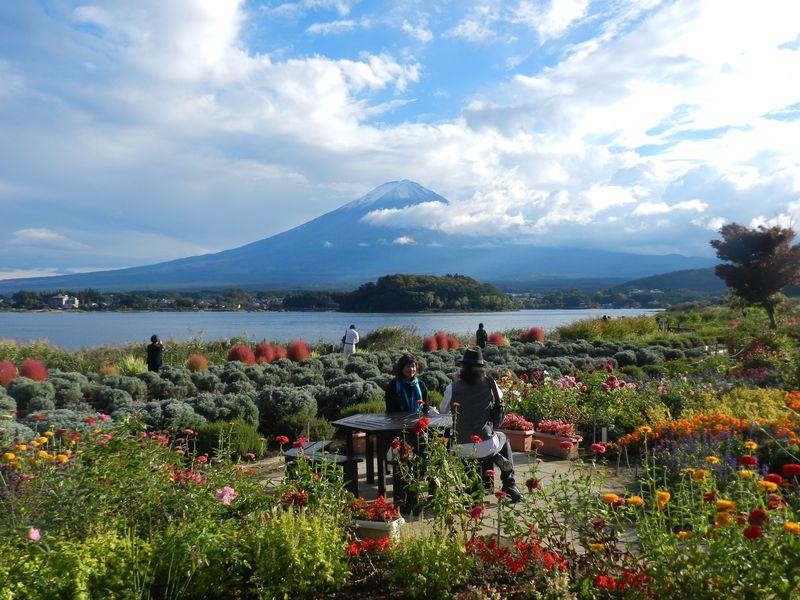 富士山の絶景を季節の花園と共に楽しむ河口湖畔「大石公園」