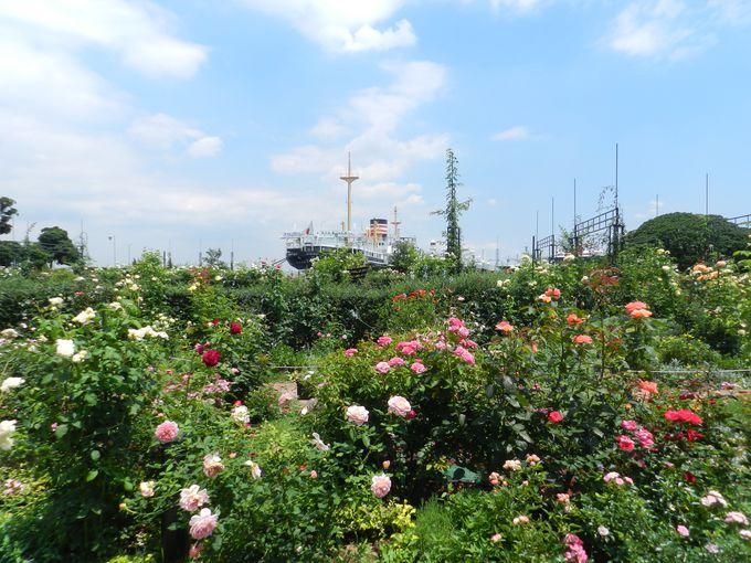 バラだけの見本園から、バラのあるお庭へ大チェンジ!