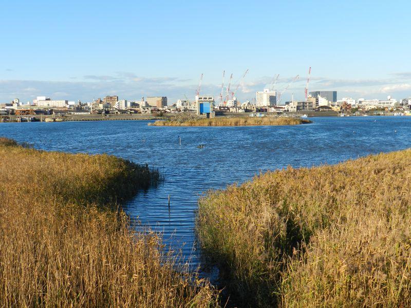 意外なほど自然が豊か! 水鳥の訪れる冬の多摩川河口へ