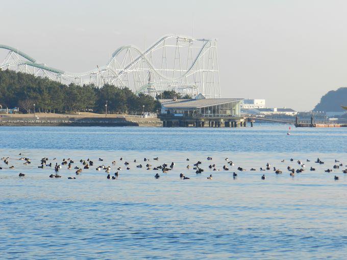 称名寺から海の公園へ。目の前には東京湾が広がります。