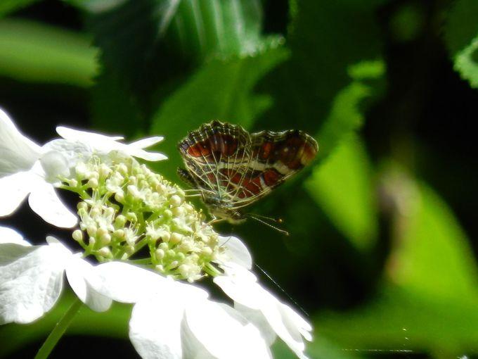 山登りの最中に遭遇する、美しい昆虫たち
