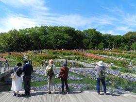 都市緑化よこはまフェア 里山ガーデンで花と緑に囲まれて…