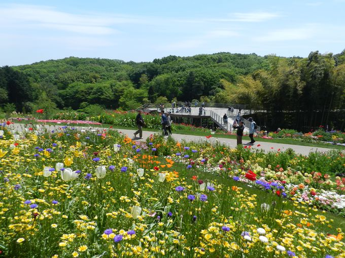 その広さは約10,000�u。横浜市最大級の大花壇をご覧あれ!
