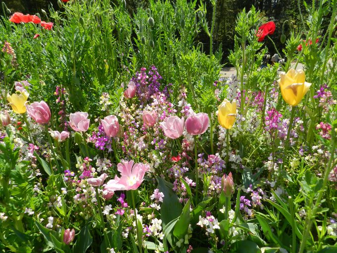 マクロからミクロに注目。大花壇の花をクローズアップ!