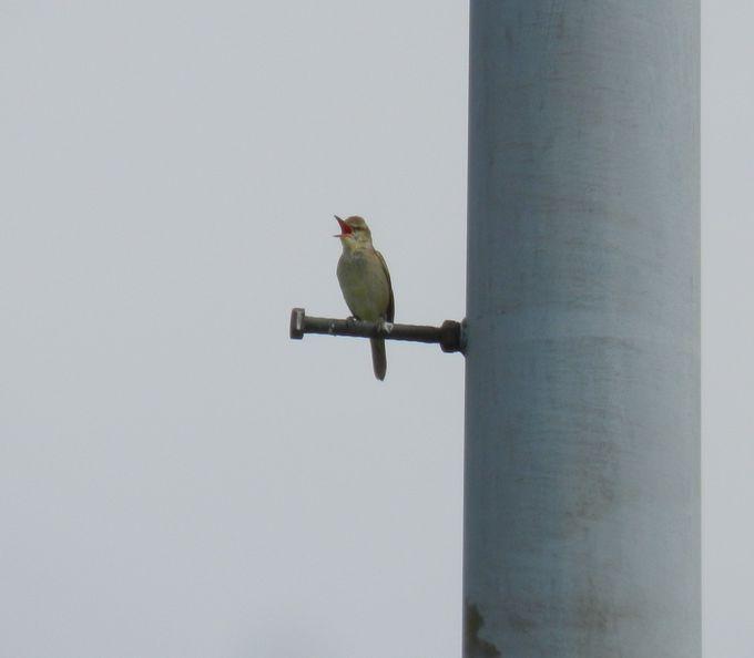 野鳥も多く飛来する秋ヶ瀬公園