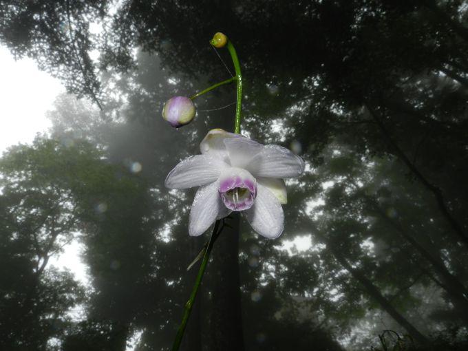 関東最大の群生地! 森の斜面に咲き乱れる可憐な花々