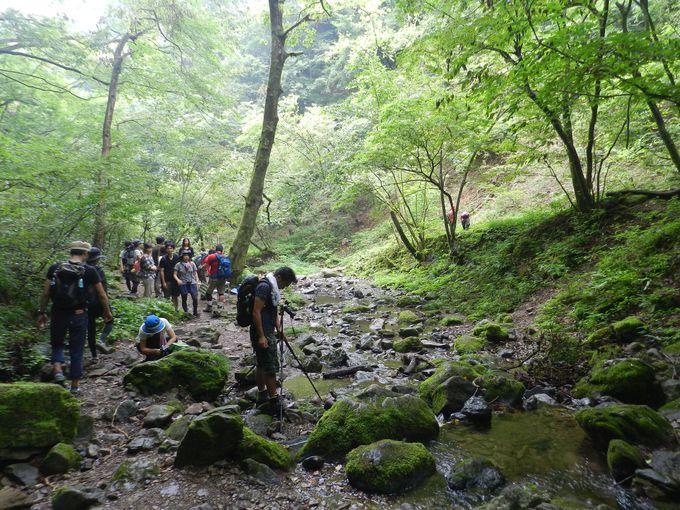 御岳神社からさらに奥、清流の流れる登山道へ……