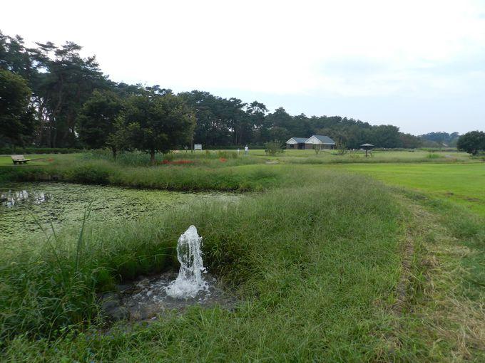 """緑ある、まだ暖かいシーズンの""""白鳥の泉"""""""