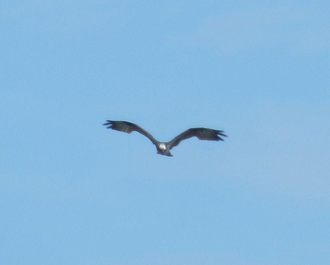 その他にも見られる鳥たち。中には珍しい鳥も……!