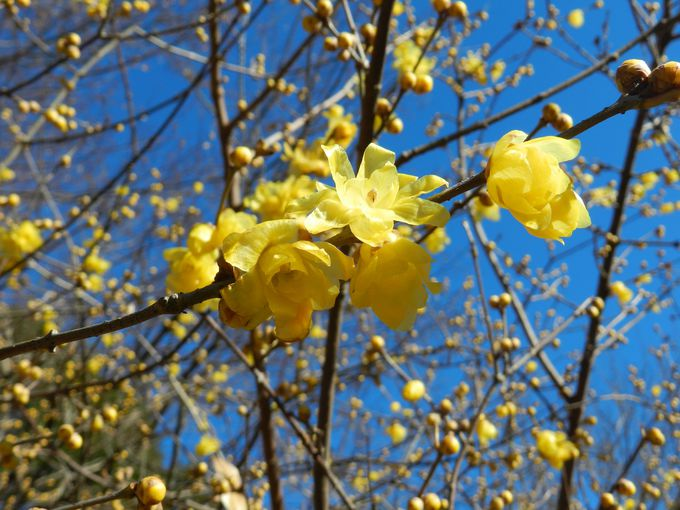 冬〜春にかけて、鳥と共に公園を彩る花々
