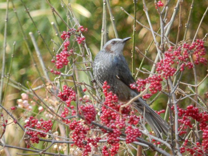 冬の鳥たちは何を食べるの?