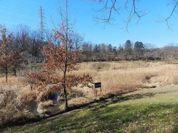 野川沿いに生きる草木が描き出す、植物のランドスケープ