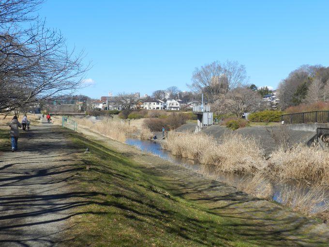 野川の散策路をのんびり歩いてみよう