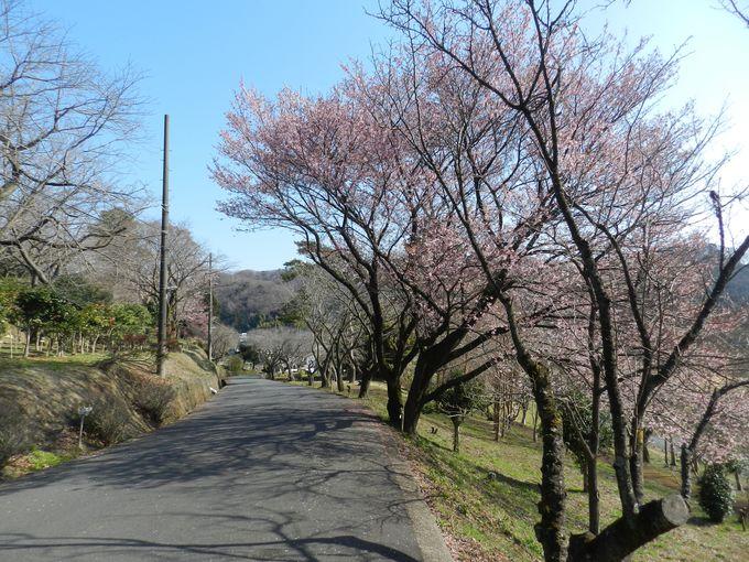 緑につつまれた静かな山間部で、早春の自然美を堪能!