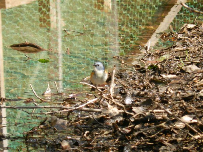 自然観察園を歩きながら、かわいい小鳥を探しましょう!