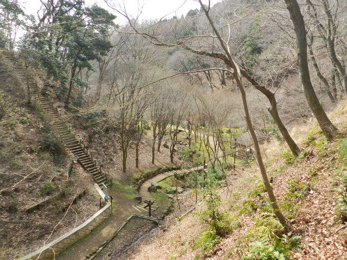 ハイキング感覚で楽しめる、早春の七沢森林公園散策