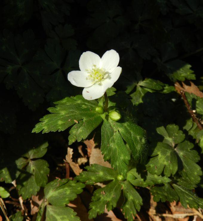 山歩きがてら、早春の花を探してみよう