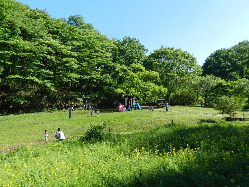 ズーラシア近くにある山野草の宝庫「四季の森公園」めぐり