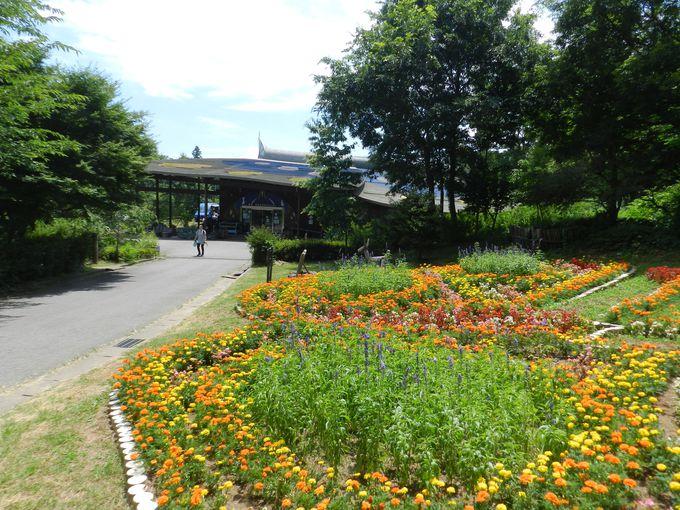花と緑でいっぱいの公園をぐるりと散策