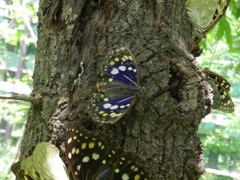 あの国蝶に会える公園!山梨県北杜市・オオムラサキ自然公園
