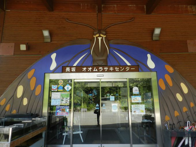 オオムラサキセンターで国蝶とその暮らしを知ろう