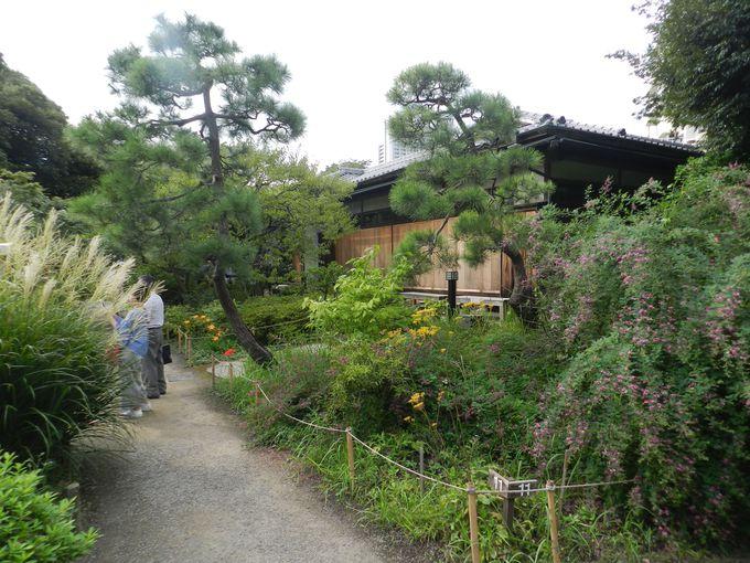 庶民の憩いの場として愛されてきた、日本の草庭