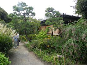 日本庭園とは一味違う? 江戸の草庭「向島百花園」に行こう