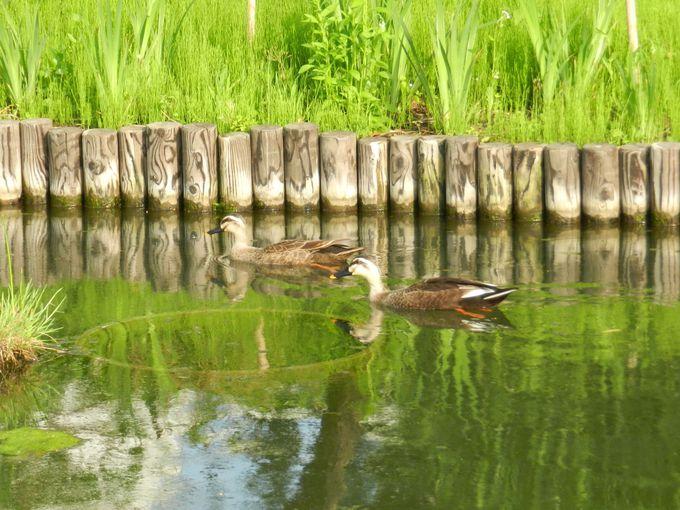 江戸の草庭を訪れる、小さな生きものたちをクローズアップ