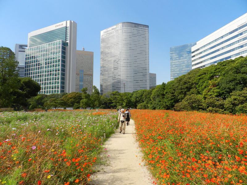コスモスの咲く日本庭園!東京「浜離宮恩賜庭園」の秋を満喫