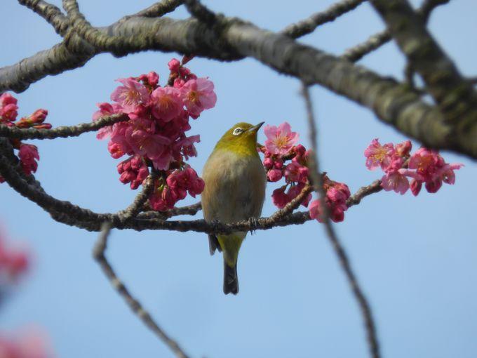 他にもいます。冬のベイエリアで見かける鳥たち