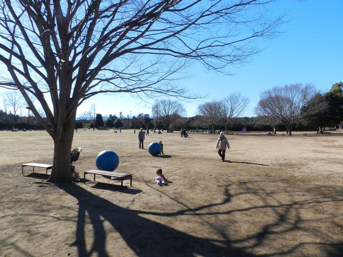 """""""遊び""""の場も盛りだくさん。子供も飽きない森林公園です"""