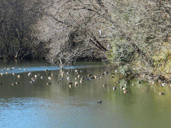 冬の森林公園で、野鳥を探してみましょう
