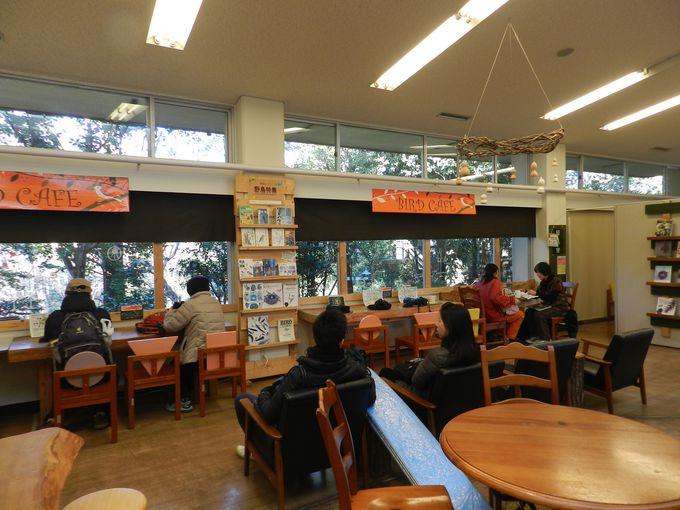 都市緑化植物園のバードカフェは必見!