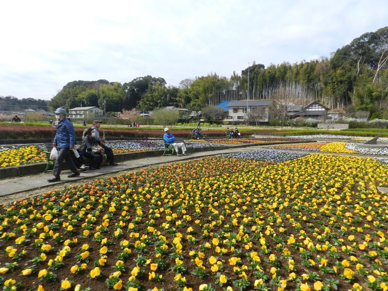 千葉県松戸市 21世紀の森と広場で早春の自然に親しもう!