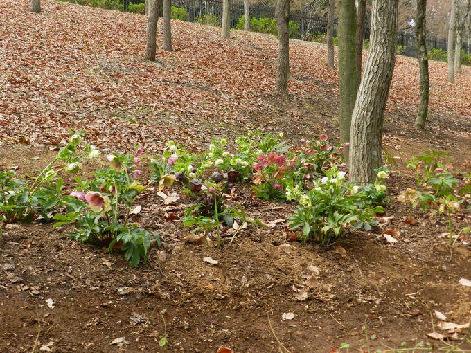 園内を歩きながら「春の花」を探そう
