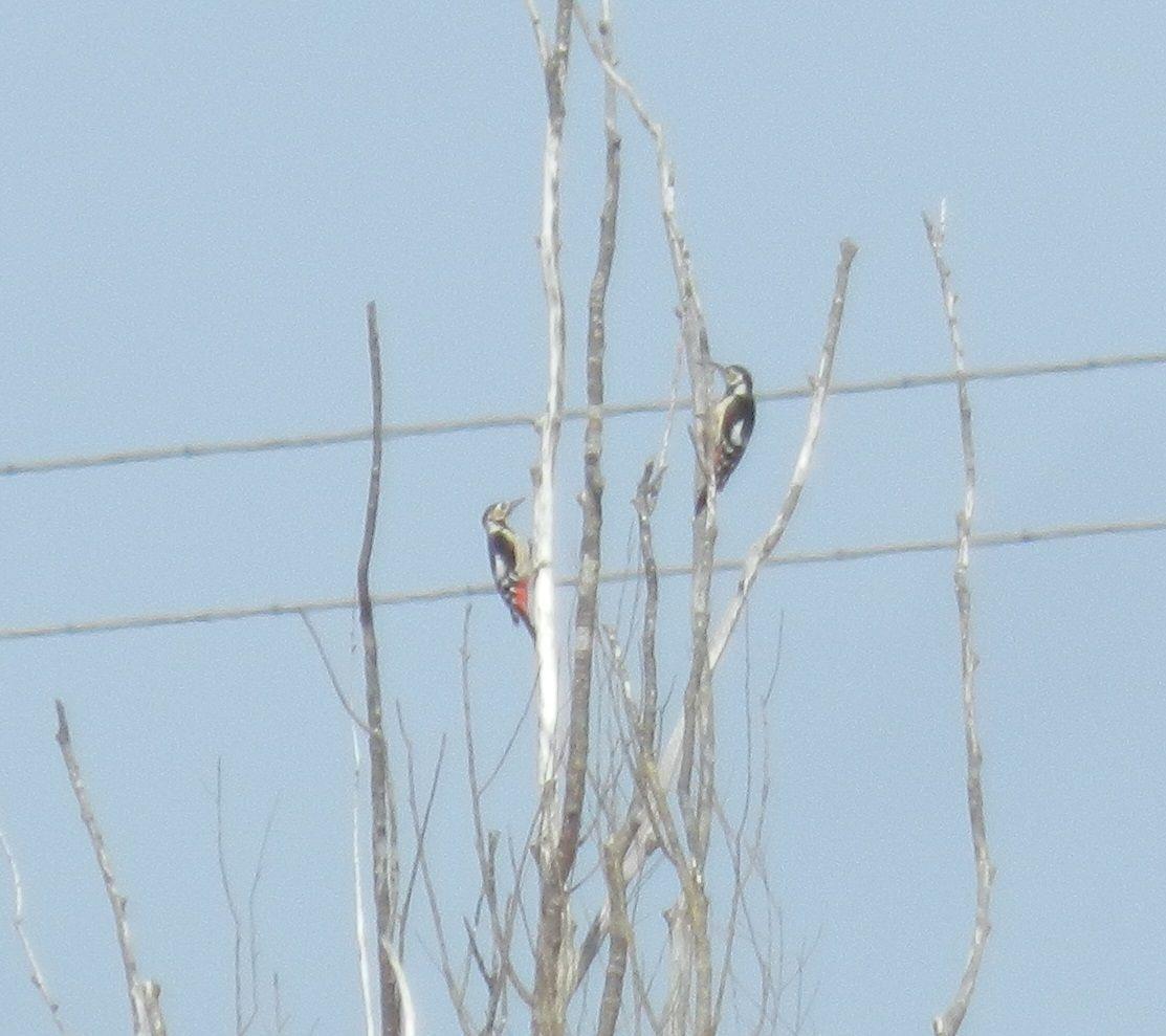 上空にも池にも! ちょっと珍しい広場の鳥たち