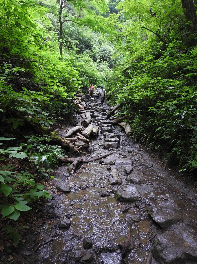 緑深まる真夏を控えた、潤いたっぷりの高尾山を歩く