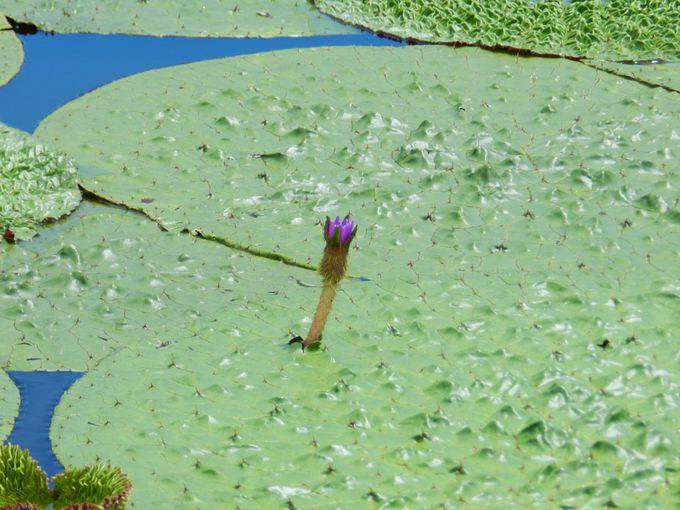 夏の水元公園、その他の魅力をご紹介!