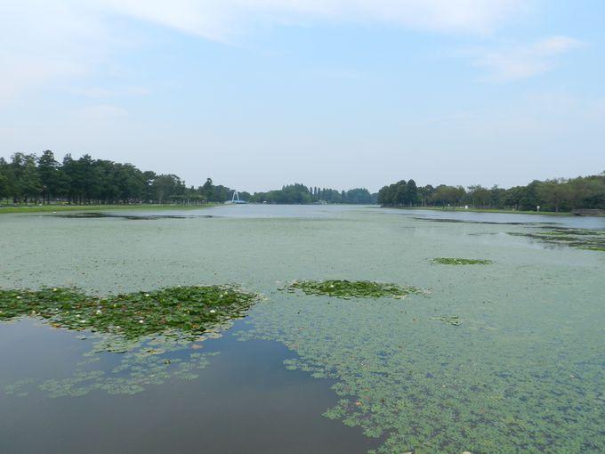 色濃く染まった夏の緑と、水のコントラストが魅力!