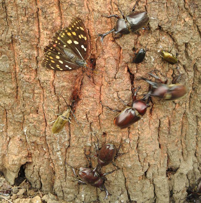 都心では滅多に見られない?昆虫たちの宝庫ここにあり!