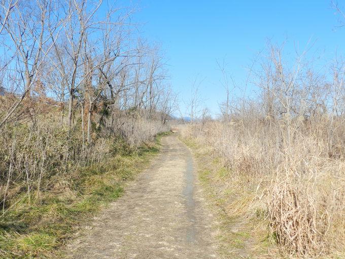 川沿いの葦原も要チェック。野鳥たちの格好の隠れ家です
