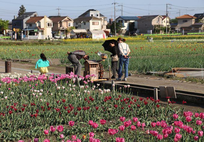 春は花も見所。チューリップ公園は必見です